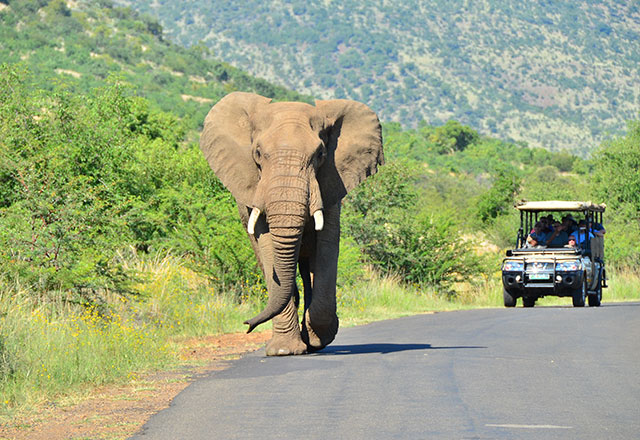 The Pilanesberg National Park